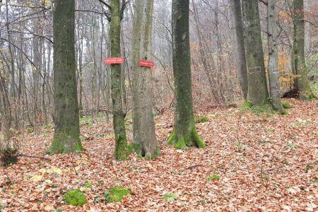 Lubnik - križišče za Gabrovo ali po grebenih.jpg