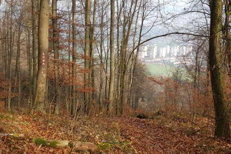 Lubnik - pogled s poti proti Podlubniku.jpg